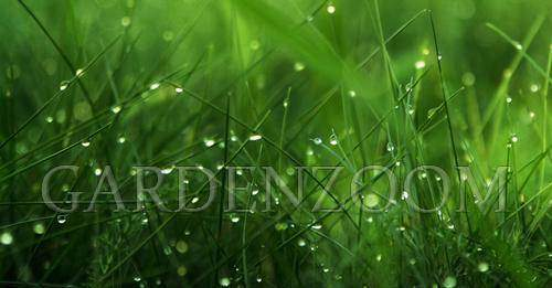 Can I Mow Wet Grass with a Trimmer