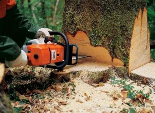 which chainsaw to choose for home